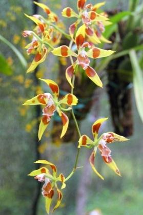forest-yumbilla-flora